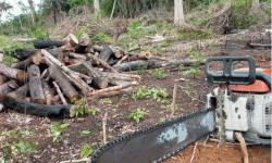 Ibama autorizou corte de 600 milhões de árvores desde 2007