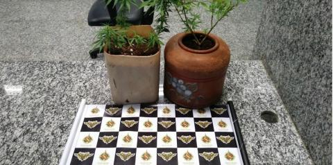 Menor cultivava maconha em filtro de barro em Santa Maria