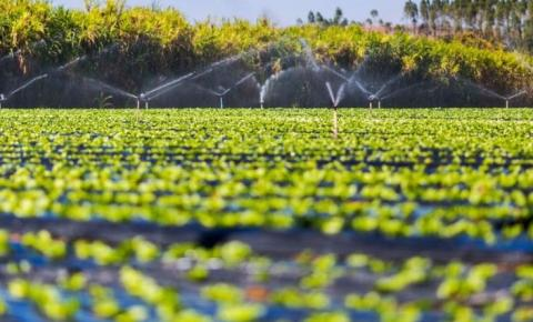 Brasil é, cada vez mais, a maior potência agrícola do planeta