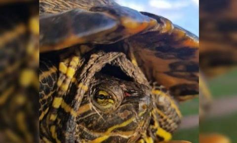 Após denúncia, PCDF apreende tartarugas, lagarto e cobra em casa no Entorno