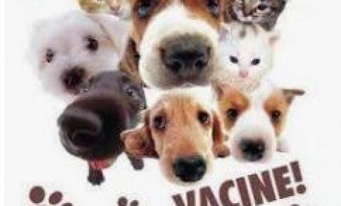Campanha antirrábica abre vacinação para cães e gatos
