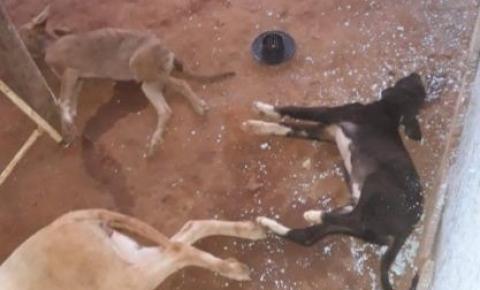 Raio derruba árvore, mata três cães e deixa homem ferido no DF