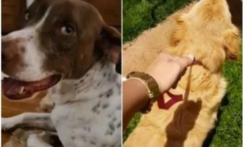 Cães conquistam direito de entrar na Justiça contra antigos donos
