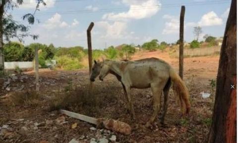 Após denúncia, abatedouro clandestino de cavalos é fechado em GO