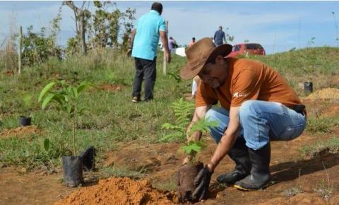 Administração realiza plantio de mudas para preservar nascente de água de Santa Maria
