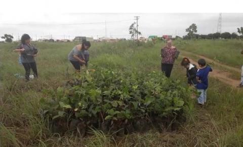Administração e comunidade realizam o plantio de 1.000 mudas no Parque Ecológico de Santa Maria