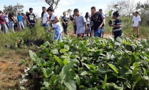 Plantio de duas mil mudas de árvores nativas no Parque Ecológico de Santa Maria