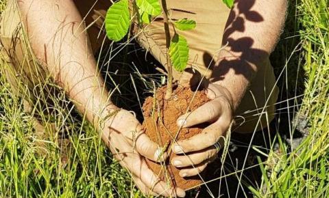 Administração e projeto Ambiental realizam plantio de 400 mudas em Santa Maria