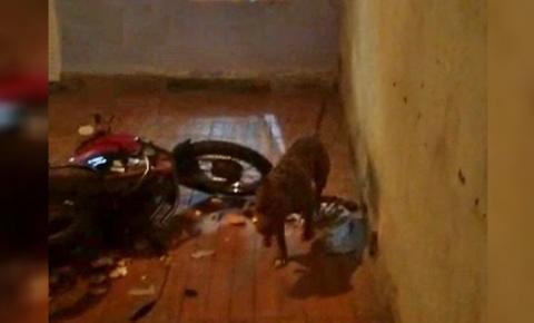 Polícia mata pitbull que estava trancado em casa com criança no DF