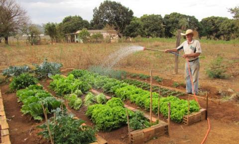 Falta de incentivo dificulta a vida do pequeno produtor